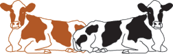 koeienkade koeien