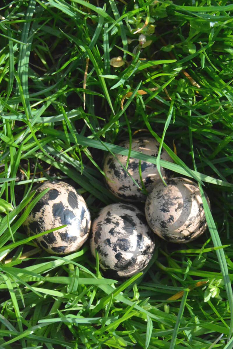 boerderijeducatie: eieren in het veld